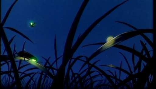 Licurici Sanpetru de vara